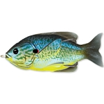 Blue/Yellow Pumpkinseed