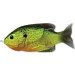 Florescent Pumpkinseed