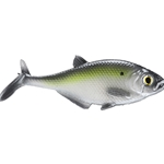 "Smash-Tech 7"" Gizzard Shad Line-Thru Swimbait"