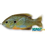 Natural Blue Pumpkinseed